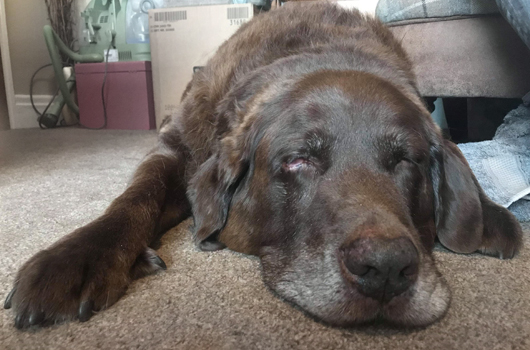 In loving memory of Charlie (The Big Lad)