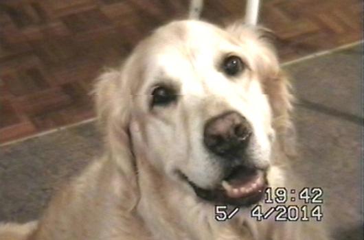 In loving memory of Alfie